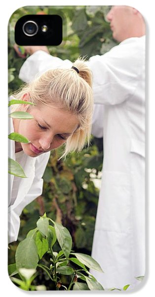 Scientists Examining Tomatoes IPhone 5 / 5s Case by Gombert, Sigrid