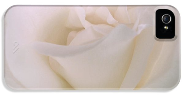 Close Up iPhone 5 Cases - Softness of a White Rose Flower iPhone 5 Case by Jennie Marie Schell