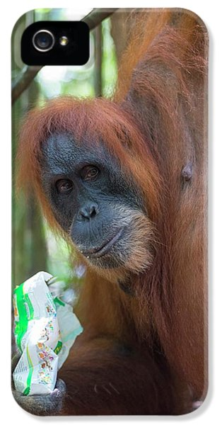 Sumatran Orangutan IPhone 5 / 5s Case by Scubazoo