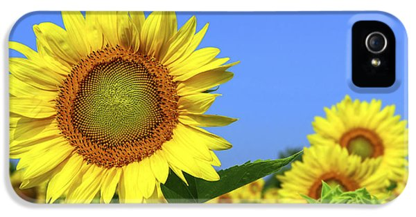 Summertime iPhone 5 Cases - Sunflower field iPhone 5 Case by Elena Elisseeva