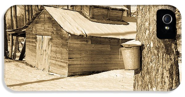 Shack iPhone 5 Cases - The Old Sugar Shack iPhone 5 Case by Edward Fielding