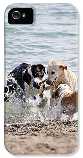 Playful iPhone 5 Cases - Three dogs playing on beach iPhone 5 Case by Elena Elisseeva