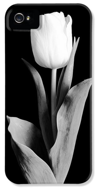Gardens iPhone 5 Cases - Tulip iPhone 5 Case by Sebastian Musial