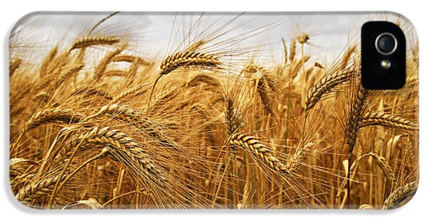 Growth iPhone 5 Cases - Wheat iPhone 5 Case by Elena Elisseeva