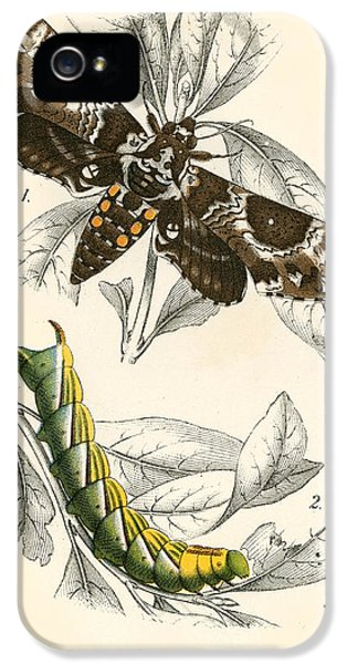 Butterflies IPhone 5 / 5s Case by English School