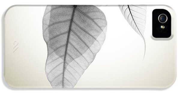 Leaf iPhone 5 Cases - Pho Or Bodhi iPhone 5 Case by Atiketta Sangasaeng