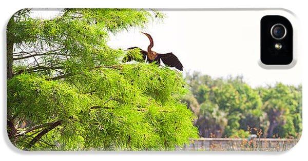 Anhinga Anhinga Anhinga On A Tree IPhone 5 / 5s Case by Panoramic Images