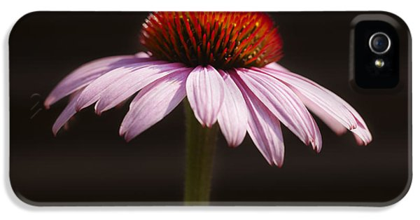 Echinacea iPhone 5 Cases - Cornflower iPhone 5 Case by Tony Cordoza