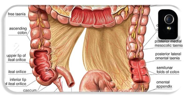 Large Intestine IPhone 5 / 5s Case by Asklepios Medical Atlas