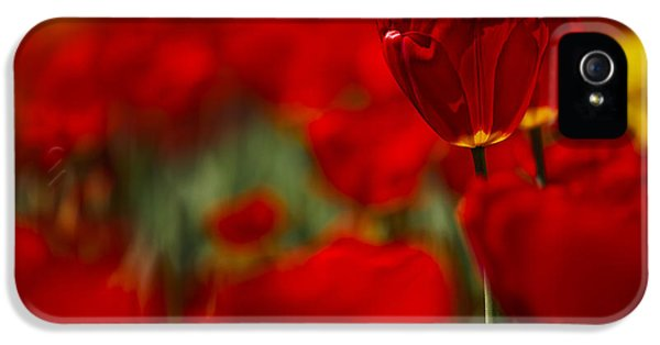 Tulips iPhone 5 Cases - Red and Yellow Tulips iPhone 5 Case by Nailia Schwarz