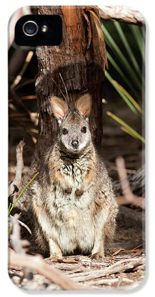 Tammar Wallaby (macropus Eugenii IPhone 5 / 5s Case by Martin Zwick