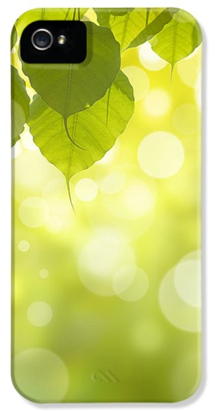 Greenish iPhone 5 Cases - Pho Or Bodhi iPhone 5 Case by Atiketta Sangasaeng