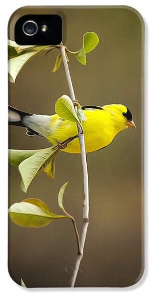 State Bird iPhone 5 Cases - American Goldfinch iPhone 5 Case by Christina Rollo