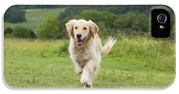Canid iPhone 5 Cases - Golden Retriever iPhone 5 Case by John Daniels
