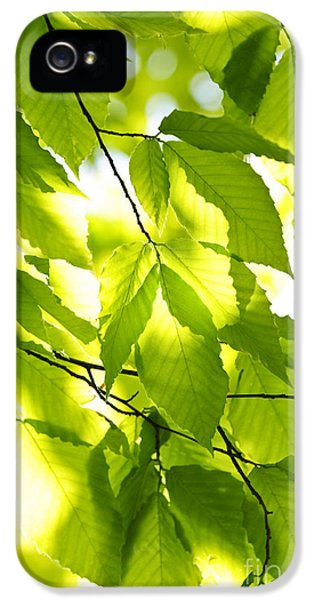 Growth iPhone 5 Cases - Green spring leaves iPhone 5 Case by Elena Elisseeva