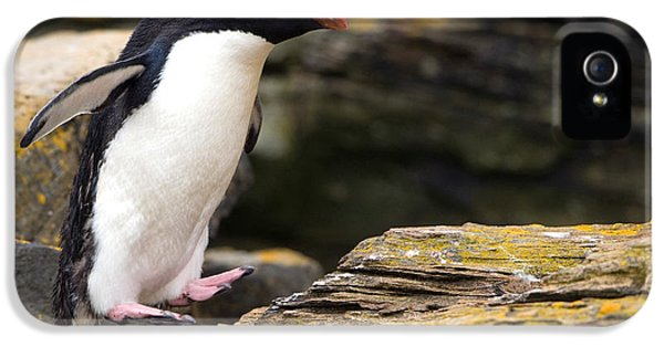 Rockhopper Penguin IPhone 5 / 5s Case by John Shaw