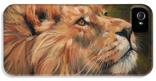 Mane iPhone 5 Cases - Lion iPhone 5 Case by David Stribbling
