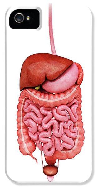 Human Digestive System IPhone 5 / 5s Case by Pixologicstudio
