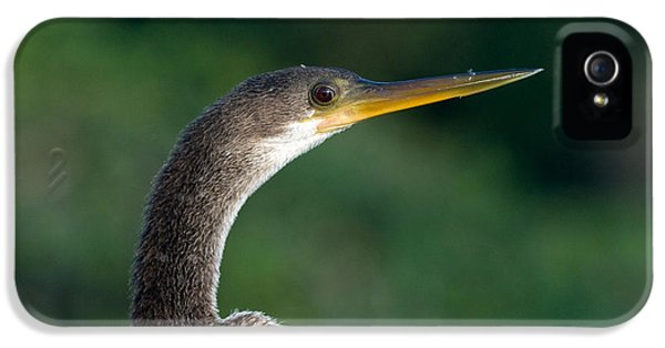 Anhinga IPhone 5 / 5s Case by Mark Newman