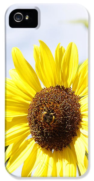 Bee iPhone 5 Cases - Bee on flower iPhone 5 Case by Les Cunliffe