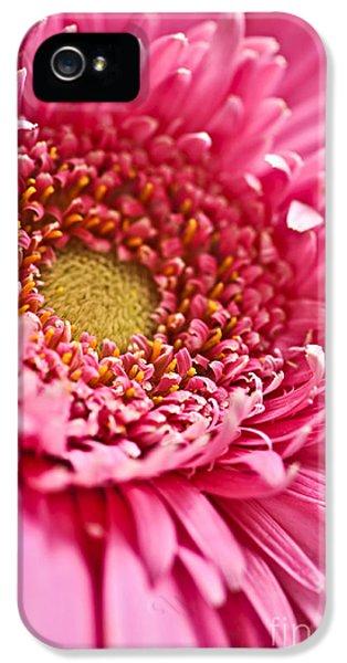 Extreme iPhone 5 Cases - Gerbera flower iPhone 5 Case by Elena Elisseeva