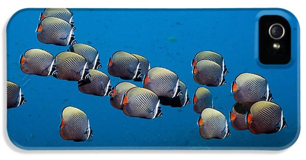 Redtail iPhone 5 Cases - Redtail Butterflyfish iPhone 5 Case by Georgette Douwma