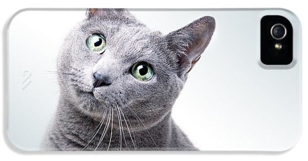 Playful iPhone 5 Cases - Russian Blue Cat iPhone 5 Case by Nailia Schwarz