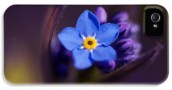 Forget Me Not iPhone 5 Cases - Forget-Me-Not - Myosotis - VanDusen Botanical Garden iPhone 5 Case by May L