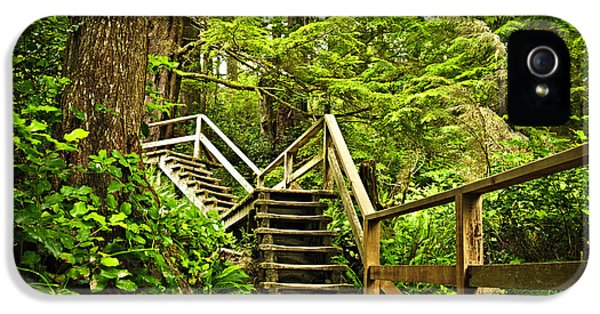 Protection iPhone 5 Cases - Path in temperate rainforest iPhone 5 Case by Elena Elisseeva