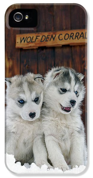 Canid iPhone 5 Cases - Siberian Husky Puppies iPhone 5 Case by Rolf Kopfle