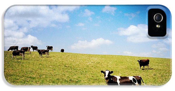 Agricultural iPhone 5 Cases - Cows iPhone 5 Case by Les Cunliffe