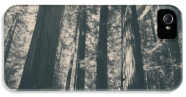 California iPhone 5 Cases - A Breath of Fresh Air iPhone 5 Case by Laurie Search
