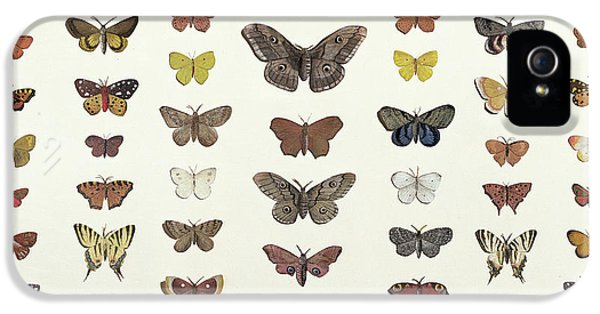 A Collage Of Butterflies And Moths IPhone 5 / 5s Case by French School