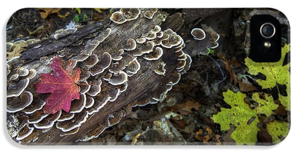 Burnt Umber iPhone 5 Cases - A Forest Tide Pool iPhone 5 Case by Sean Foster