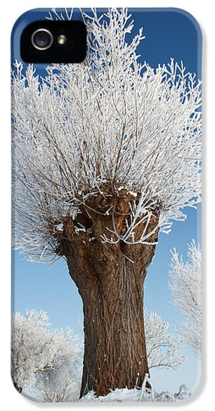 Knot iPhone 5 Cases - A frosted willow on a very cold and bright winter day iPhone 5 Case by Roeselien Raimond
