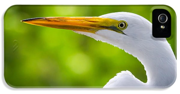 Water iPhone 5 Cases - A Lighter version of a Snowy Egret iPhone 5 Case by Andres Leon