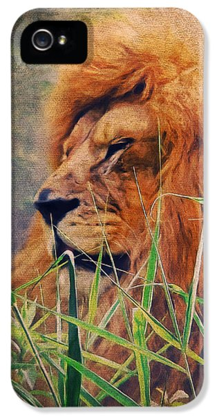 Lion iPhone 5 Cases - A Lion Portrait iPhone 5 Case by Angela Doelling AD DESIGN Photo and PhotoArt