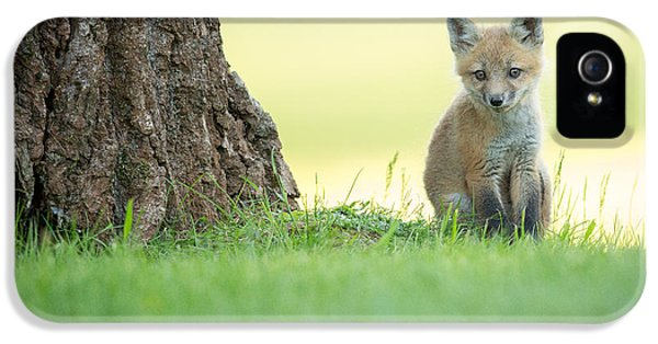 Fox Kits iPhone 5 Cases - A lone kit iPhone 5 Case by Everet Regal