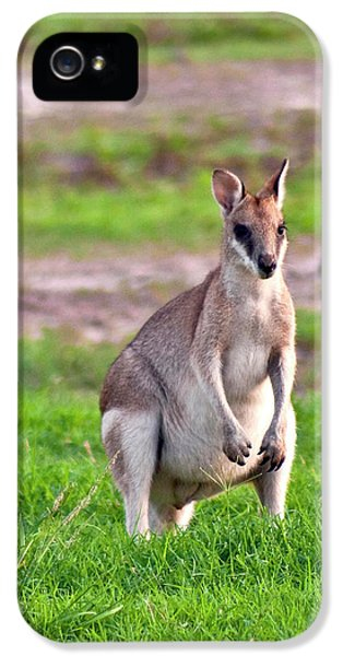 A Male Grey Kangaroos (macropus IPhone 5 / 5s Case by Miva Stock