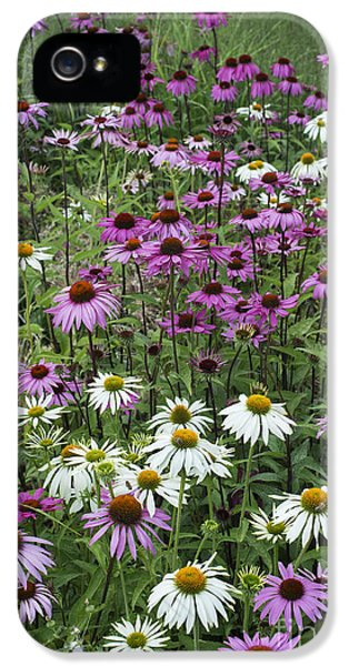 Echinacea iPhone 5 Cases - A Sea of Echinacea  iPhone 5 Case by Tim Gainey