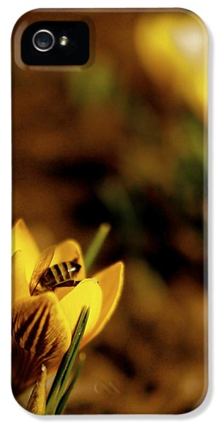 Flower iPhone 5 Cases - A Sign of Spring iPhone 5 Case by Rona Black
