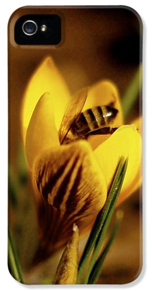 Bee iPhone 5 Cases - A Sign of Spring iPhone 5 Case by Rona Black
