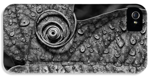 Christopher Holmes Photography iPhone 5 Cases - A Tendril Coil - BW iPhone 5 Case by Christopher Holmes