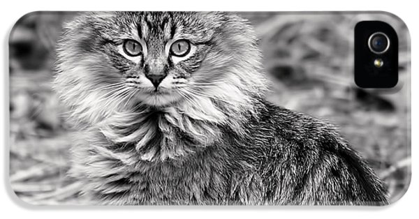Monochrome iPhone 5 Cases - A Young Maine Coon iPhone 5 Case by Rona Black