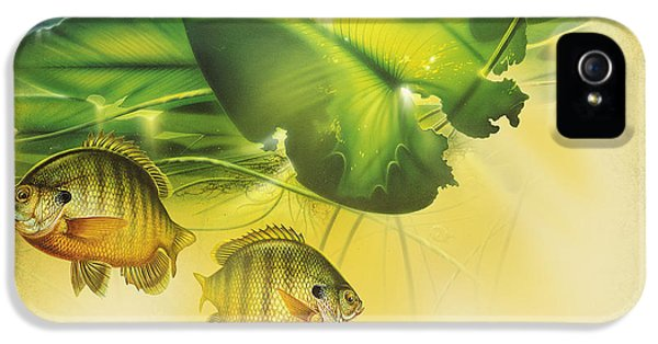 Underwater iPhone 5 Cases - Abstract Blugill iPhone 5 Case by JQ Licensing