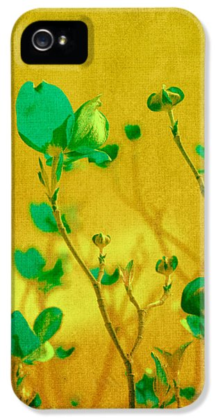 Flower iPhone 5 Cases - Abstract Dogwood iPhone 5 Case by Bonnie Bruno