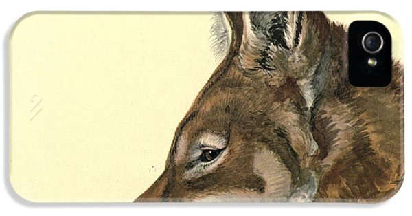 Canid iPhone 5 Cases - Abyssinian Wolf iPhone 5 Case by Louis Agassiz Fuertes