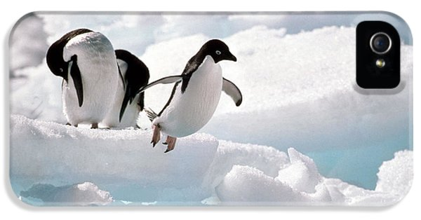 Adelie Penguins IPhone 5 / 5s Case by Art Wolfe