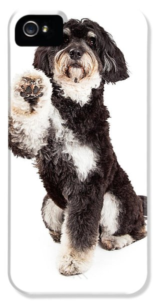 Greet iPhone 5 Cases - Adorable Poodle Mix Breed Dog Extending Paw iPhone 5 Case by Susan  Schmitz