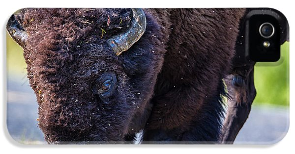 Natural iPhone 5 Cases - Adult Bison Staring iPhone 5 Case by Andres Leon